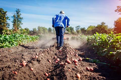 extensión rural – diplomado